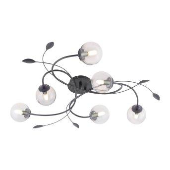 Paul Neuhaus WIDOW Lampa Sufitowa LED Czarny, 6-punktowe