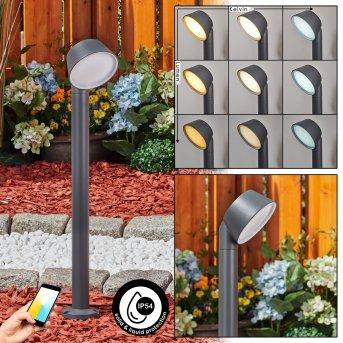 Moroni Oświetlenie ścieżek LED Antracytowy, 1-punktowy
