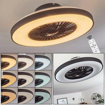 Qualiano wentylator sufitowy LED Czarny, Biały, 1-punktowy, Zdalne sterowanie