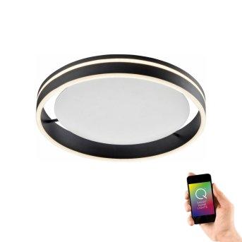 Lampa Sufitowa Paul Neuhaus Q-VITO LED Antracytowy, 1-punktowy, Zdalne sterowanie