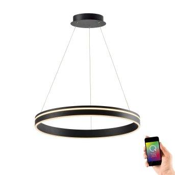 Lampa Wisząca Paul Neuhaus Q-VITO LED Antracytowy, 1-punktowy, Zdalne sterowanie