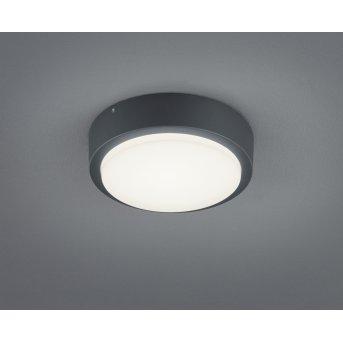 Trio BREG Lampa ścienna LED Antracytowy, 1-punktowy